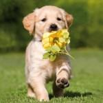 portrait-chien-fleur-585x3771