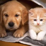 chiot-et-chaton_-journal-144537