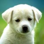 218-petit-chien-WallFizz