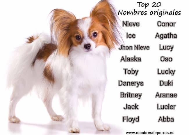 Nom de chiens original
