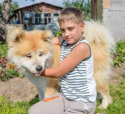 chien japonais âgé d'un an et demi