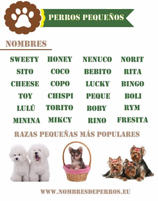 petits noms de chien