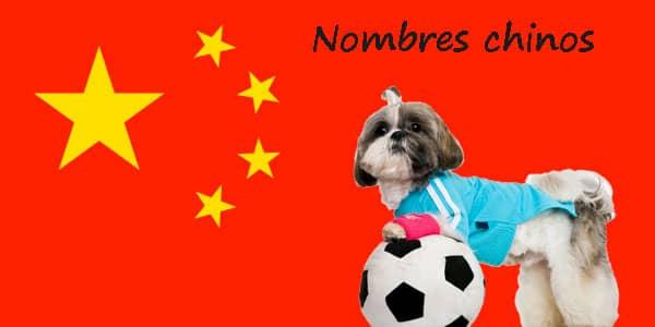 Noms de chien chinois