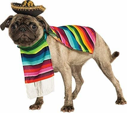 Noms mexicains pour votre chiot