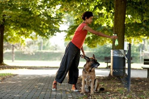 femme, à, berger allemand, chien
