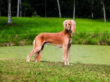 meilleurs noms pour les chiens arabes