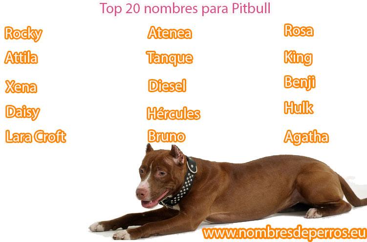 meilleurs noms pour chiens pitbull
