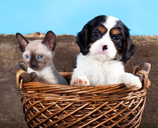 chien-et-chat-noir-blanc