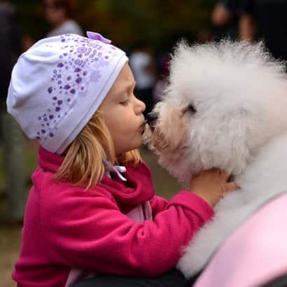 chiens aux cheveux blancs