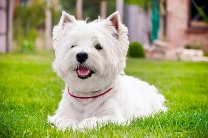 noms pour chiens blancs