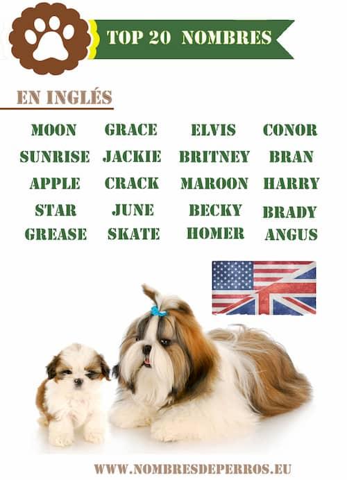 Noms anglais pour votre chiot