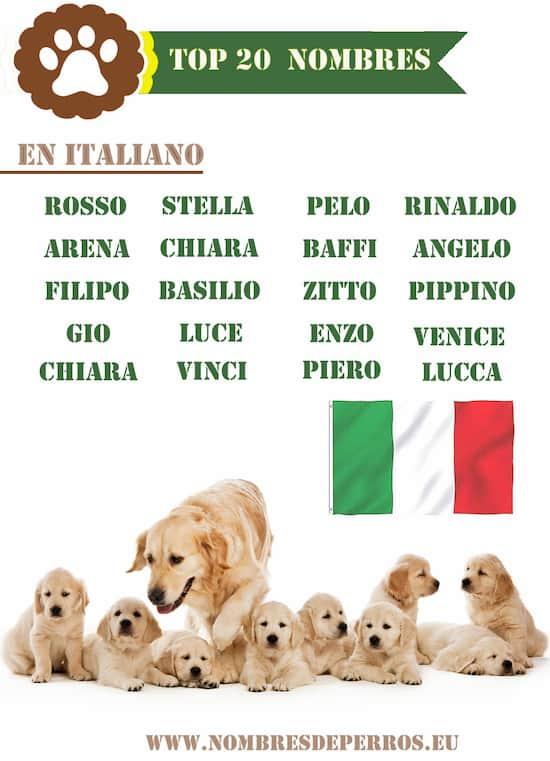 Noms italiens pour chiens