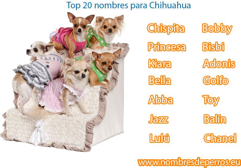 meilleurs noms pour les chiens chihuahua