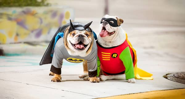 noms de super-héros pour chiens