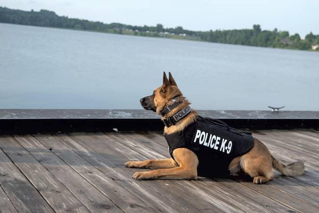 noms-pour-chiens-policiers