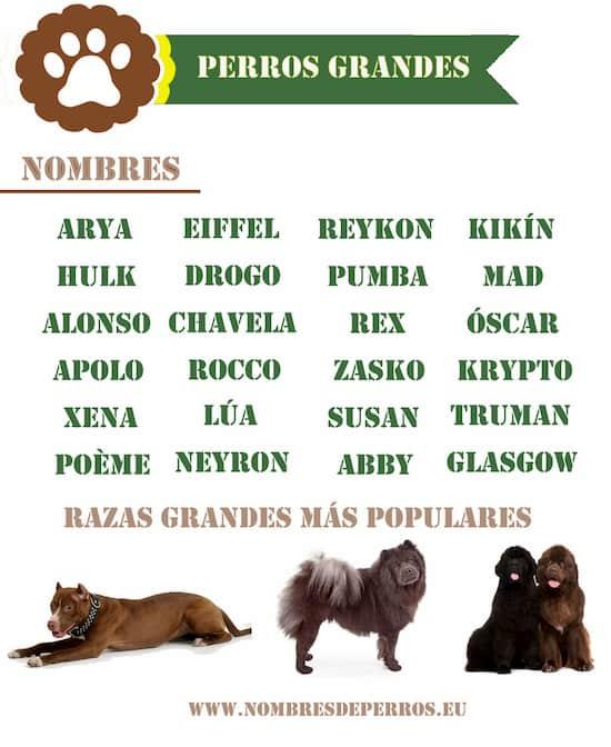 noms pour gros chiens