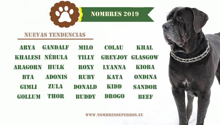 nouveaux noms de chien