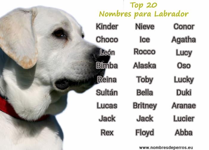 meilleurs noms pour les labradors